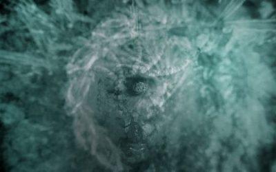 Vera F Birkenbihl – über Hypnose
